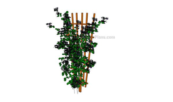Garden trellis plans