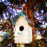 Simple Birdhouse