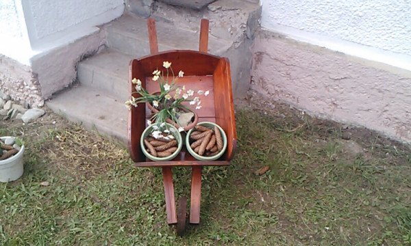 Wheelbarrow-planter