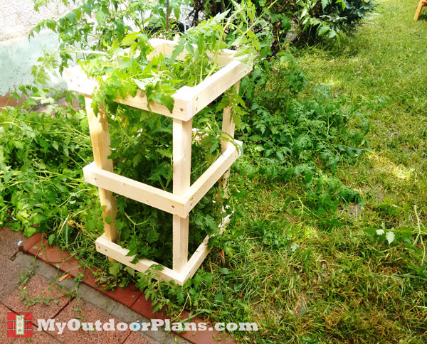 DIY Tomato Cage | MyOutdoorPlans | Free Woodworking Plans and Projects ...