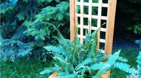 DIY Planter with Trellis