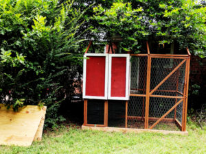 How-to-build-a-chicken-coop