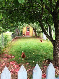 DIY-Large-Chicken-coop