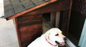 DIY XL Dog House