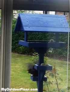DIY-Bird-Feeder
