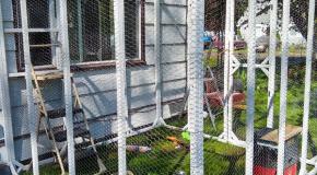 Building a Catio – DIY Project