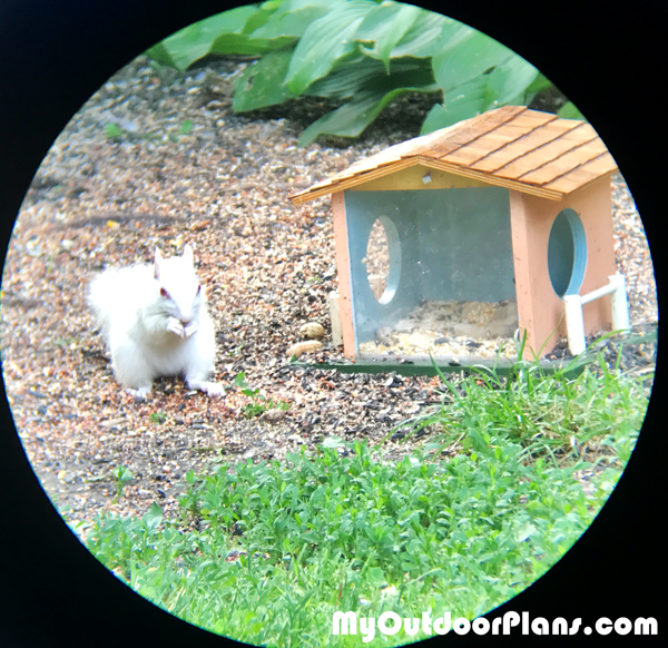 Build-a-squirrel-feeder