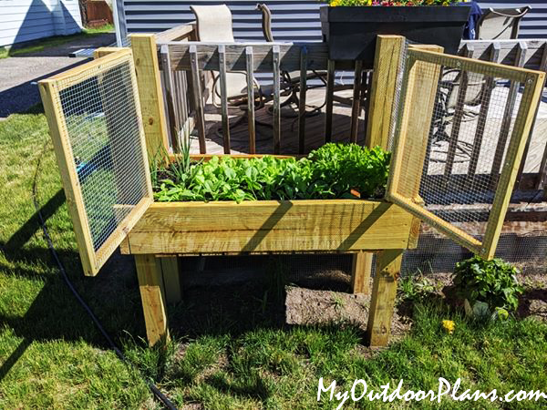 DIY Deer Proof Waist High Planter